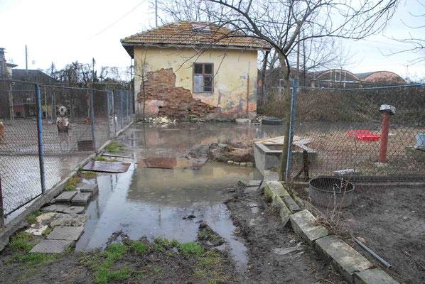 Überschwemmung im Tierheim