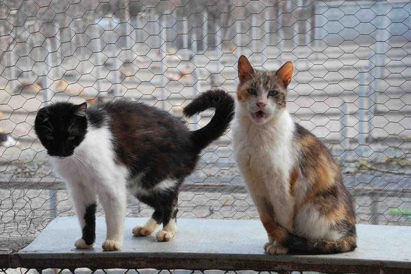 Lulu mit Katze Raschi