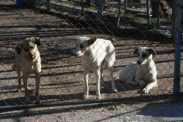Kiti und Kati mit Frida (links)
