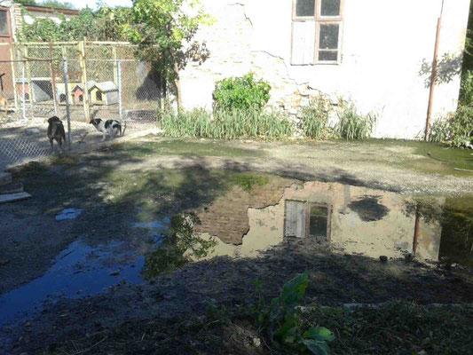 ... erste Aufnahmen nach Graben des Kanals...