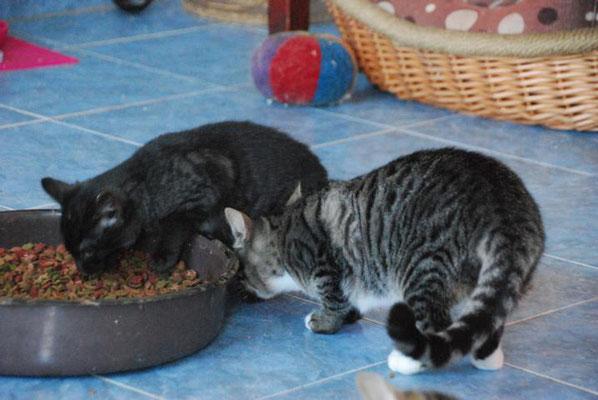 Murmel und Tibu an der Futterschüssel