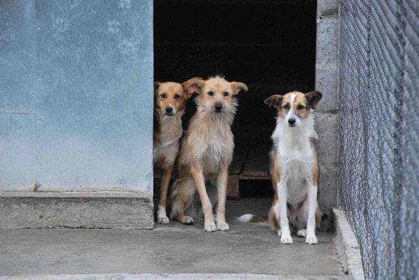 Felice, Sadi und Chloe (von links nach rechts)