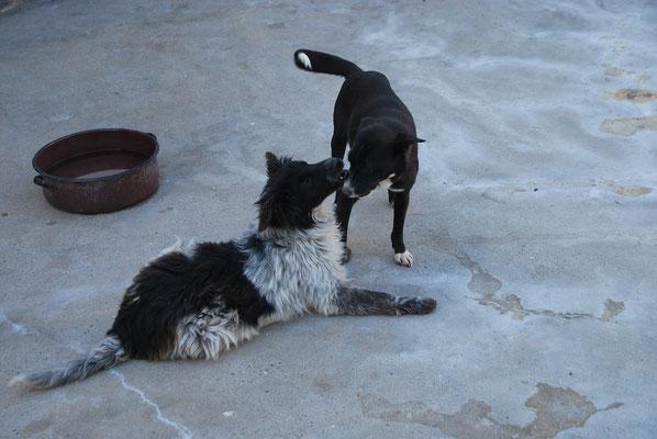 Lukey und Fanny spielen