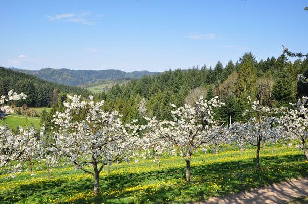 Obstplantage mit Talblick Anne Isenmann Ferienwohnung Obsthof Isenmann