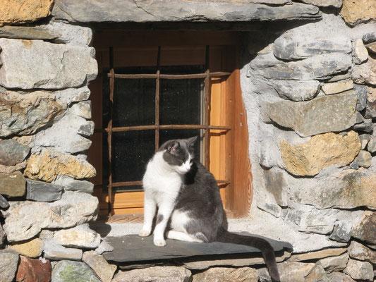 """La chatte """"diesel"""" pourfendeuse de mulots et autres rongeurs..."""