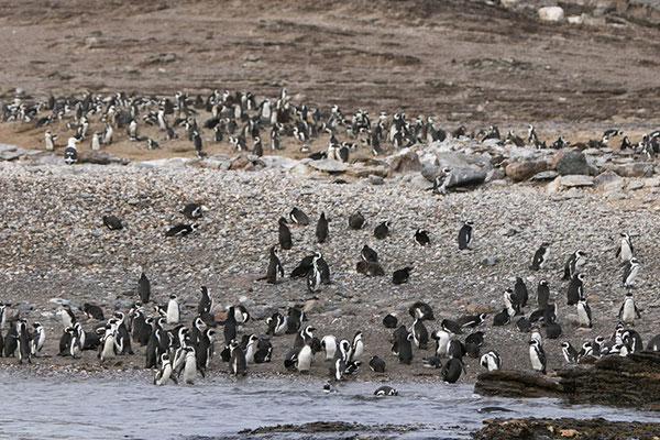 Lüderitz - Ile d'Halifax