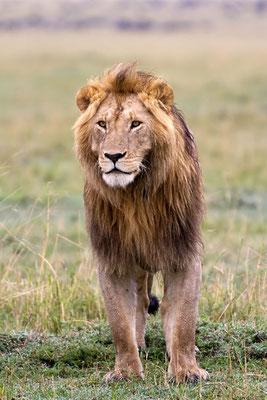 Maasai Maasai Mara - le sage SikioMara - le sage Sikio