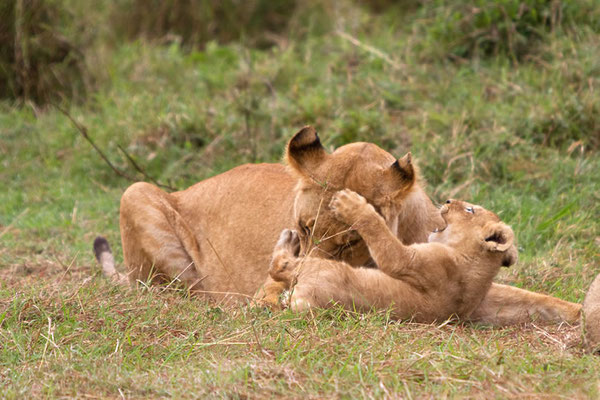 Maasai Mara - une bonne mère