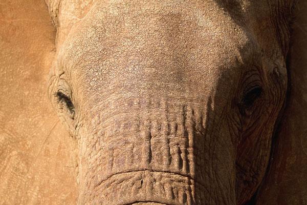 Samburu- Portrait d'éléphant