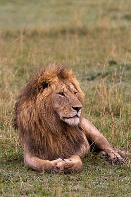 Maasai Mara - le sage Sikio