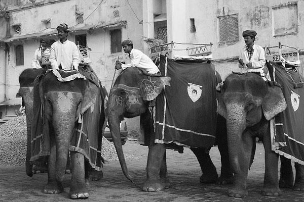 Mahout attendant les touristes - Jaipur (Inde)