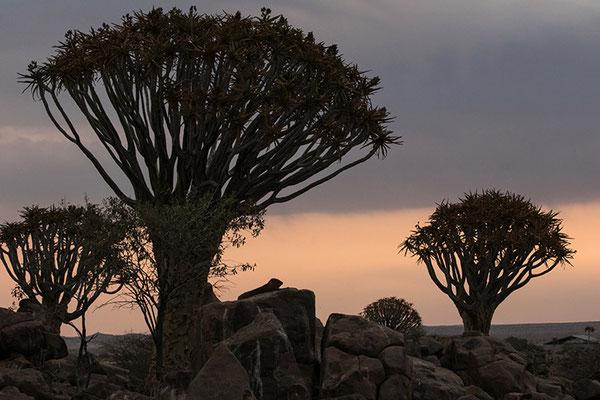 Keetmanshoop: Forêt d'arbres à carquois