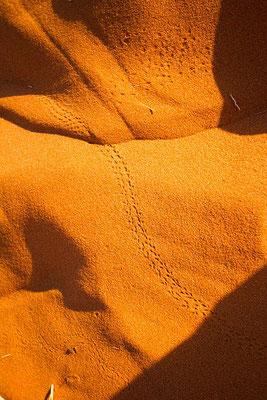 Sossusvlei: il y a de la vie sur la dune Elim