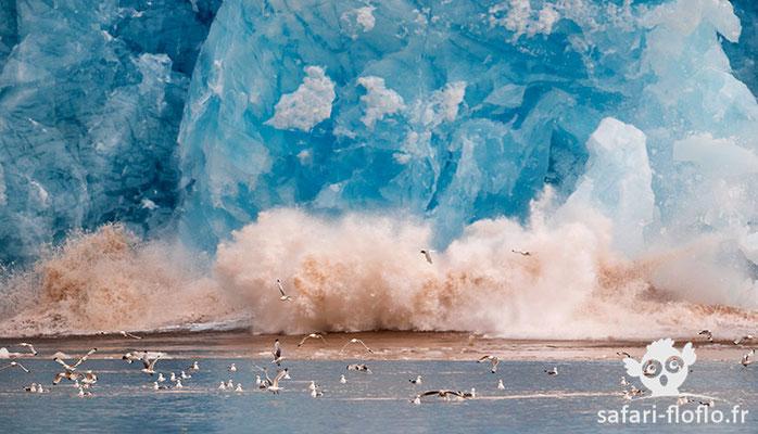 Glacier vêlant