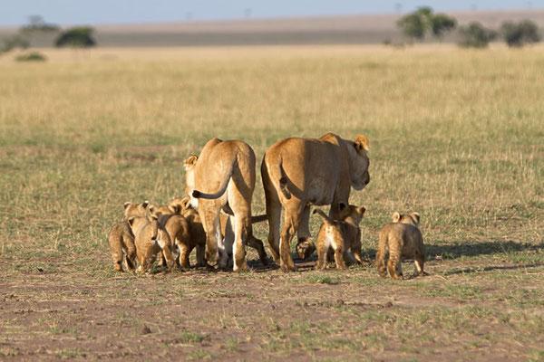 Maasai Mara - belle famille