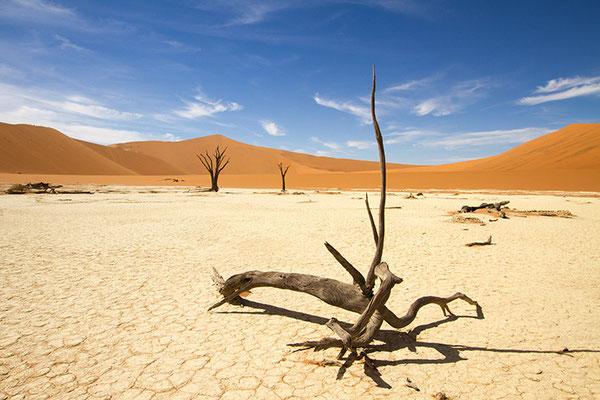 Sossusvlei: désert du Namib - Deadvlei