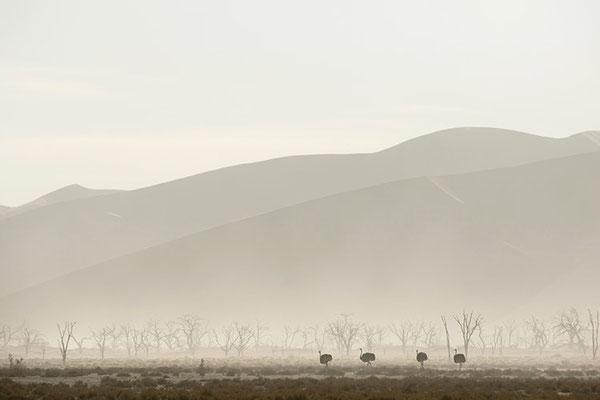 Sossusvlei - Désert du Namib - tempête de sable