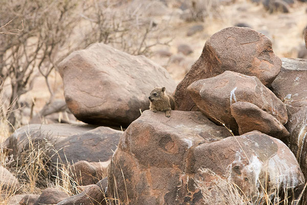 Keetmanshoop: Daman des rochers