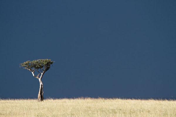 Maasai Mara - lumière d'orage
