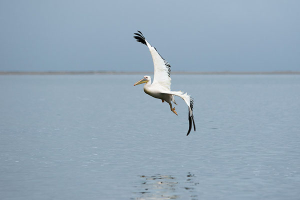 Swakopmund - Pélican