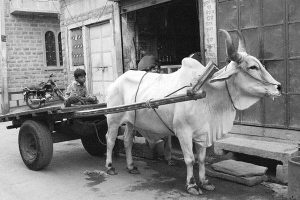 Charrette à zébu - Inde