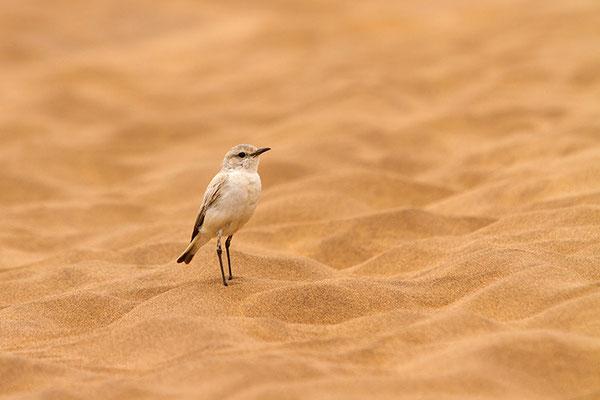 Swakopmund: desert tour - Traquet Tractrac