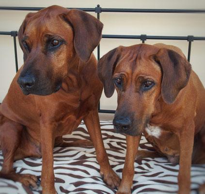 Geschwister: Filou und Nayla unsere Rentnergang