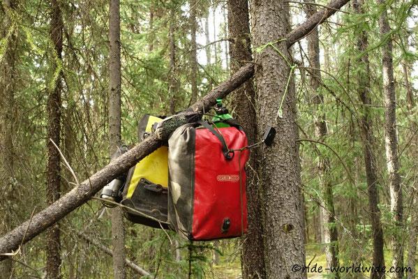 Hoch hängen im Baum