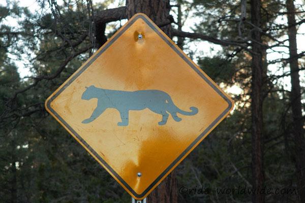 Vorsicht Mountain Lions am Grand Canyon, wir haben keine gesehen