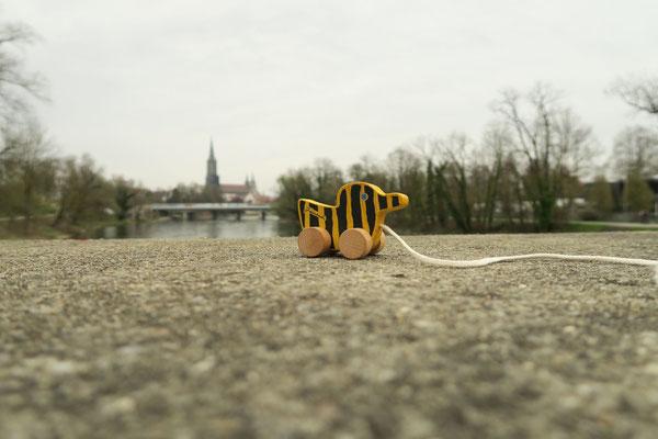 Tigerentenblick auf Ulm