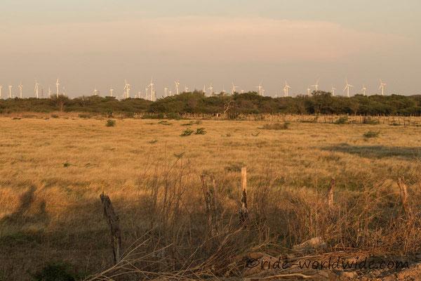 Riesige Windparks bei La Ventosa
