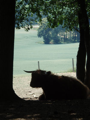 Im Wildpark Ernstbrunn: Ferdinand