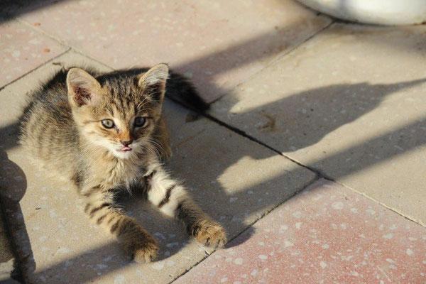 Dieser kleine Racker bekam etwas Katzenfutter von uns