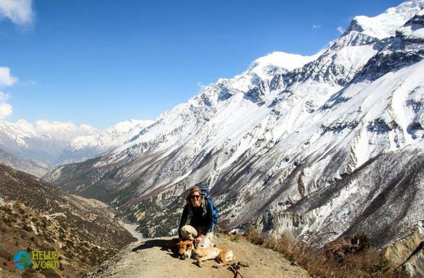 Trekking mit Hunden im Himalaya