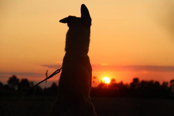 Joey Ein-Ohr bewundert den Sonnenuntergang