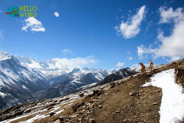 Nepal Trekking mit Hunden