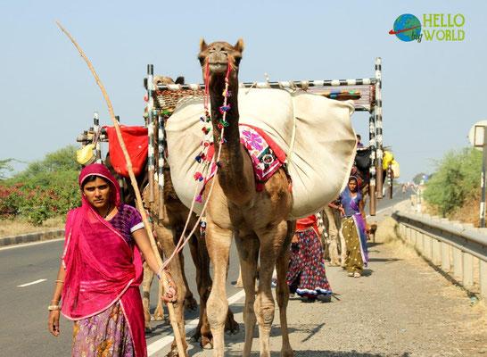 Kamel-Karawane in Indien