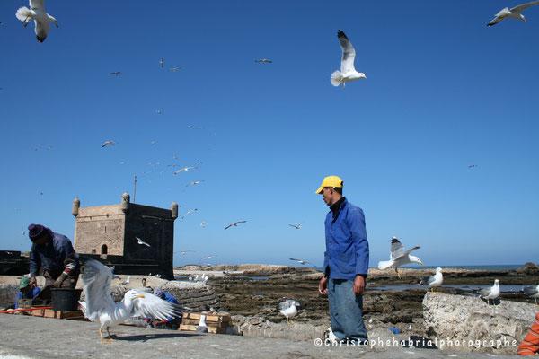 Essaouira - Port 1