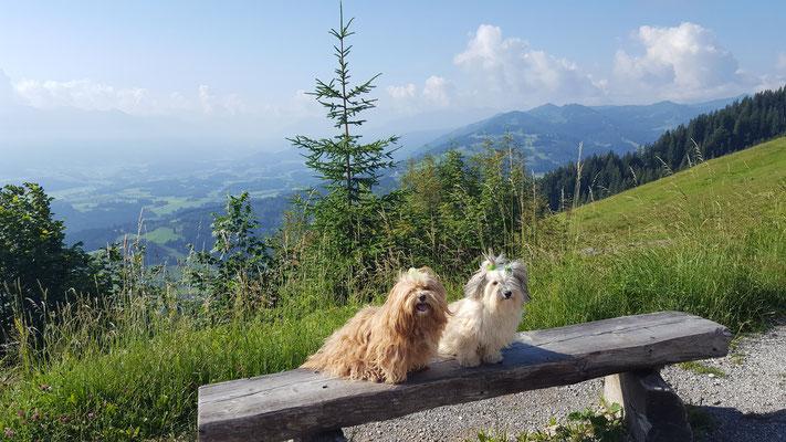 Bella und Tami auf dem Mittag