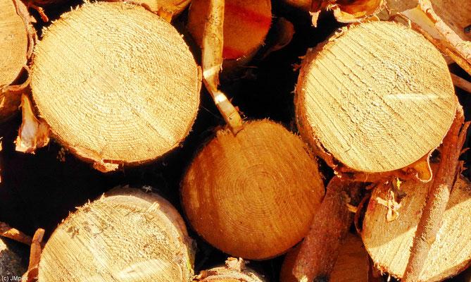 Eine Großaufnahme von gestapelten gefällten Bäumen zeigt, dass es sich um echte Bäume und (noch) nicht um Streichhölzer handelt (Sauda)