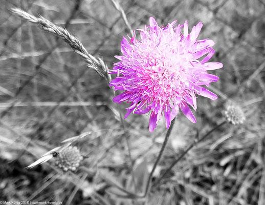 A flower in Norway.