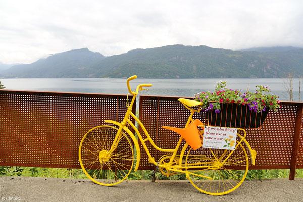 """Ein knallgelb gestrichenes ausrangiertes Fahrrad mit Blumen, Gießkanne und Schild: """"Bitte gieße uns, wenn wir durstig wirken."""" (Ryfylke)"""