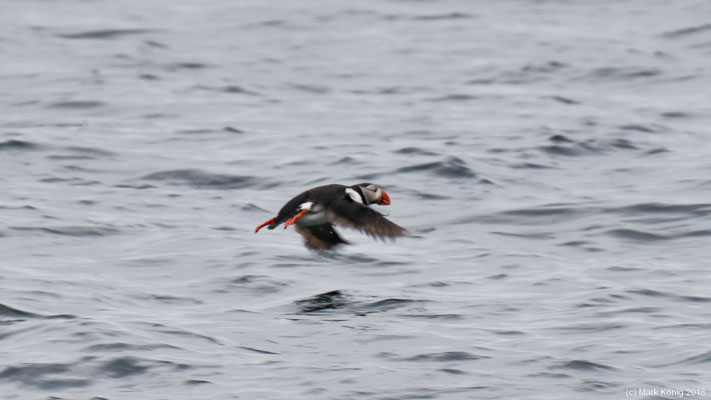 ... and finally diving or flying away.