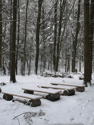 Auch unser Wald ist weiß gepudert