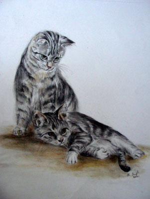 Hauskatzenpärchen mit pastellkreide gezeichnet