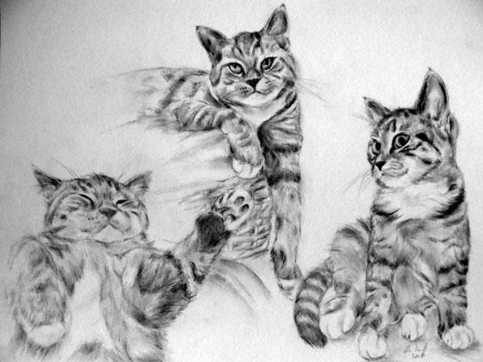 Katzen, Zeichenstudien