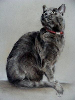 Katzenportrait, Pastellkreide