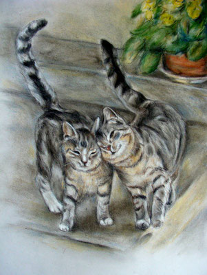 Katzenpärchen mit Pastellkreide gezeichnet