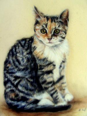 Pastellzeichnung Katze