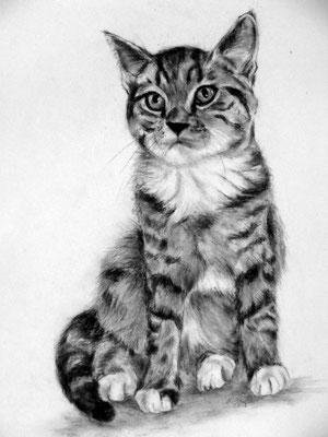 Katzenzeichnung, Bleistift mit Kohle